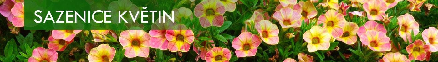 Banner Sazenice Květin million bells chameleon