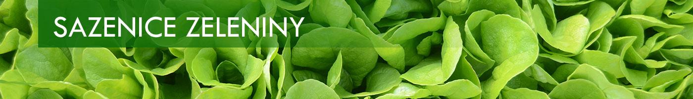 Banner sazenice zeleniny salát
